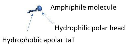 Amphiphile molecule